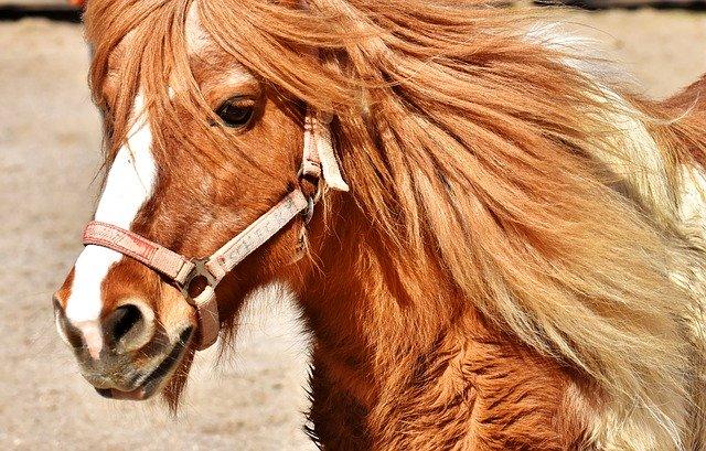 Pferd Fellmineralanalyse